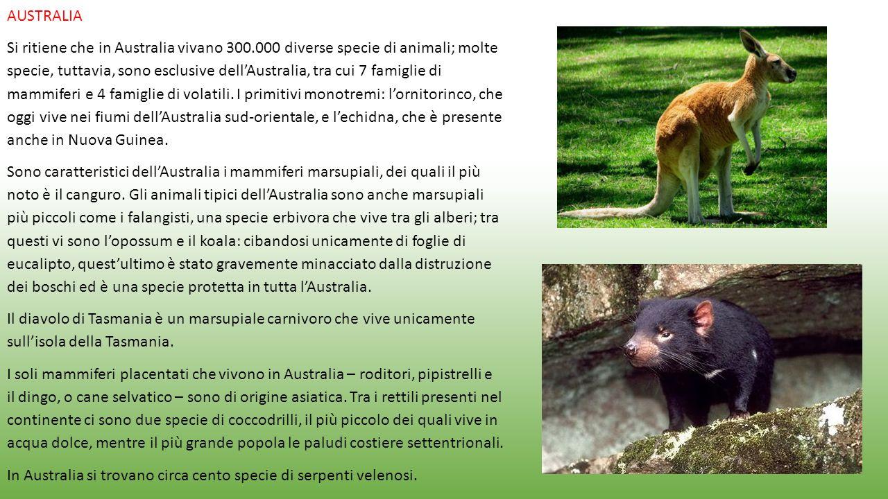 AUSTRALIA Si ritiene che in Australia vivano 300.000 diverse specie di animali; molte specie, tuttavia, sono esclusive dell'Australia, tra cui 7 famig