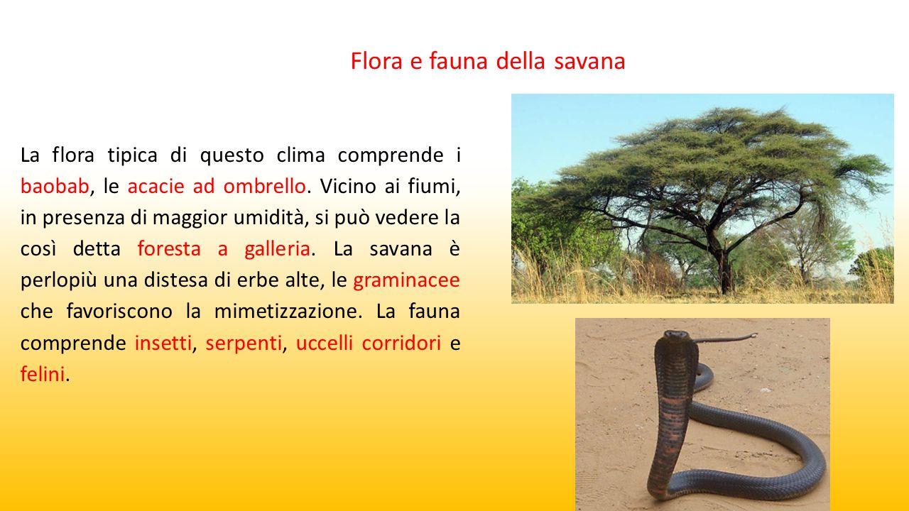 La flora tipica di questo clima comprende i baobab, le acacie ad ombrello. Vicino ai fiumi, in presenza di maggior umidità, si può vedere la così dett
