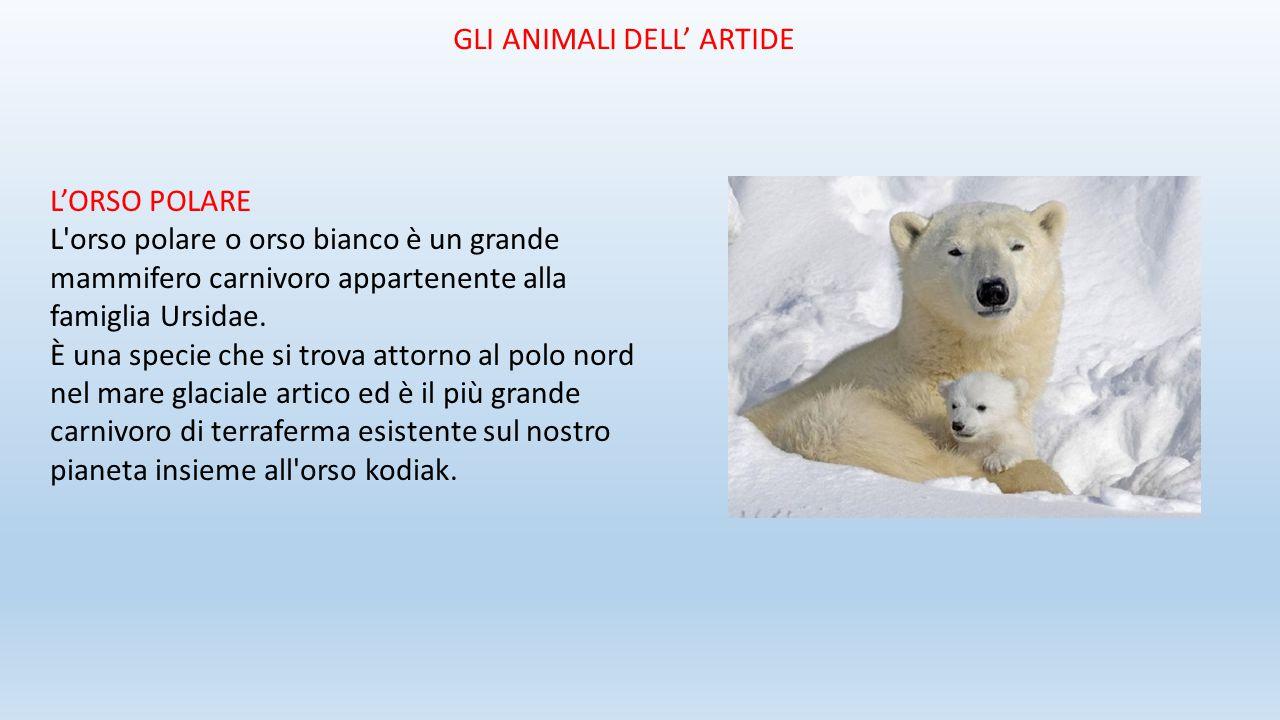L'ORSO POLARE L'orso polare o orso bianco è un grande mammifero carnivoro appartenente alla famiglia Ursidae. È una specie che si trova attorno al pol