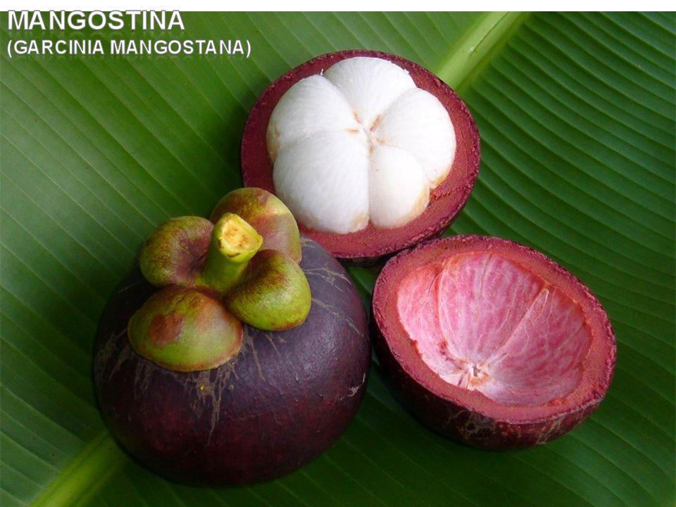Joe Morton scopre nel 1995 che nel pericarpo del frutto sono contenuti 40 Xantoni, fitonutrienti dalle incredibili proprietà SCIENCE