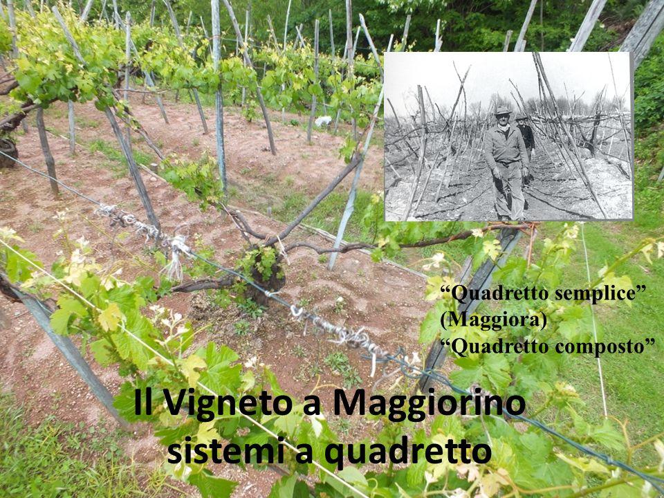 """Il Vigneto a Maggiorino sistemi a quadretto """"Quadretto semplice"""" (Maggiora) """"Quadretto composto"""""""