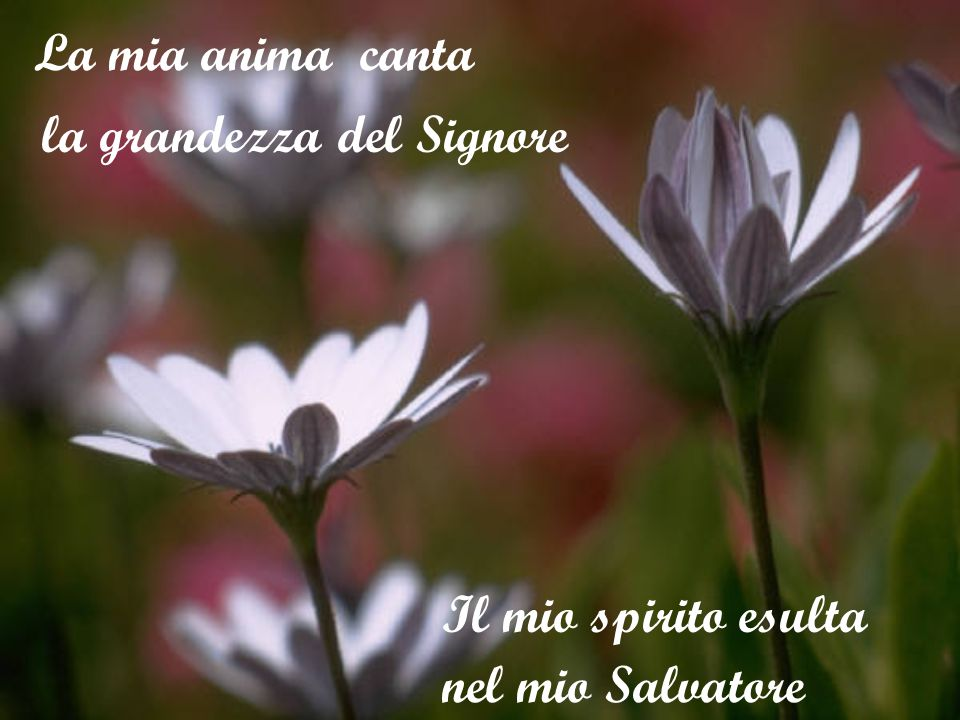 La mia anima canta nel mio Salvatore la grandezza del Signore Il mio spirito esulta