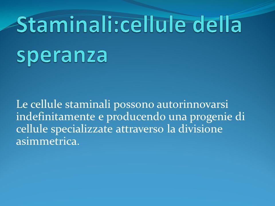 Le cellule staminali possono autorinnovarsi indefinitamente e producendo una progenie di cellule specializzate attraverso la divisione asimmetrica.
