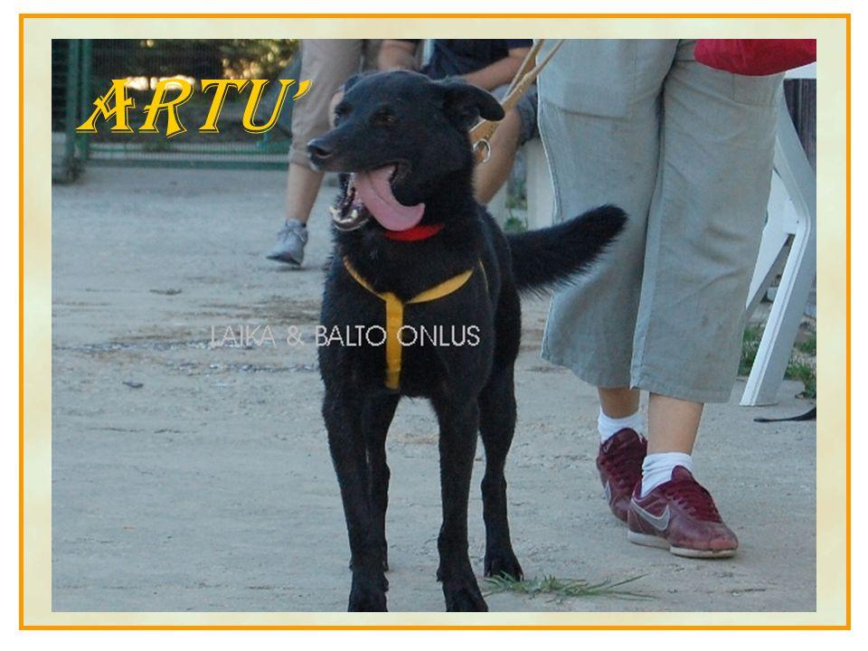DELBRY URSIDE Non Solo Cani Puoi aiutare i nostri cavalli effettuando l'adozione a distanza