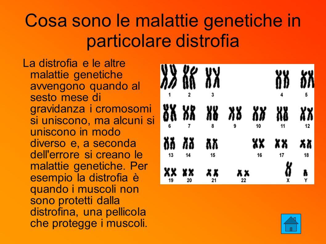 Cosa sono le malattie genetiche in particolare distrofia La distrofia e le altre malattie genetiche avvengono quando al sesto mese di gravidanza i cromosomi si uniscono, ma alcuni si uniscono in modo diverso e, a seconda dell errore si creano le malattie genetiche.