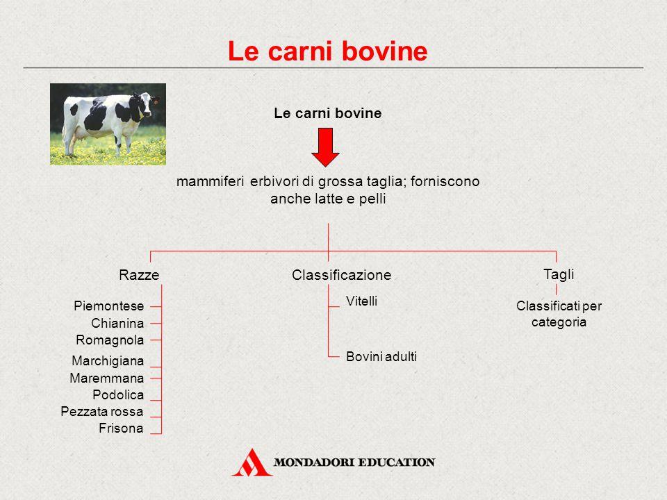 Le carni bovine mammiferi erbivori di grossa taglia; forniscono anche latte e pelli RazzeClassificazione Vitelli Bovini adulti Piemontese Chianina Rom