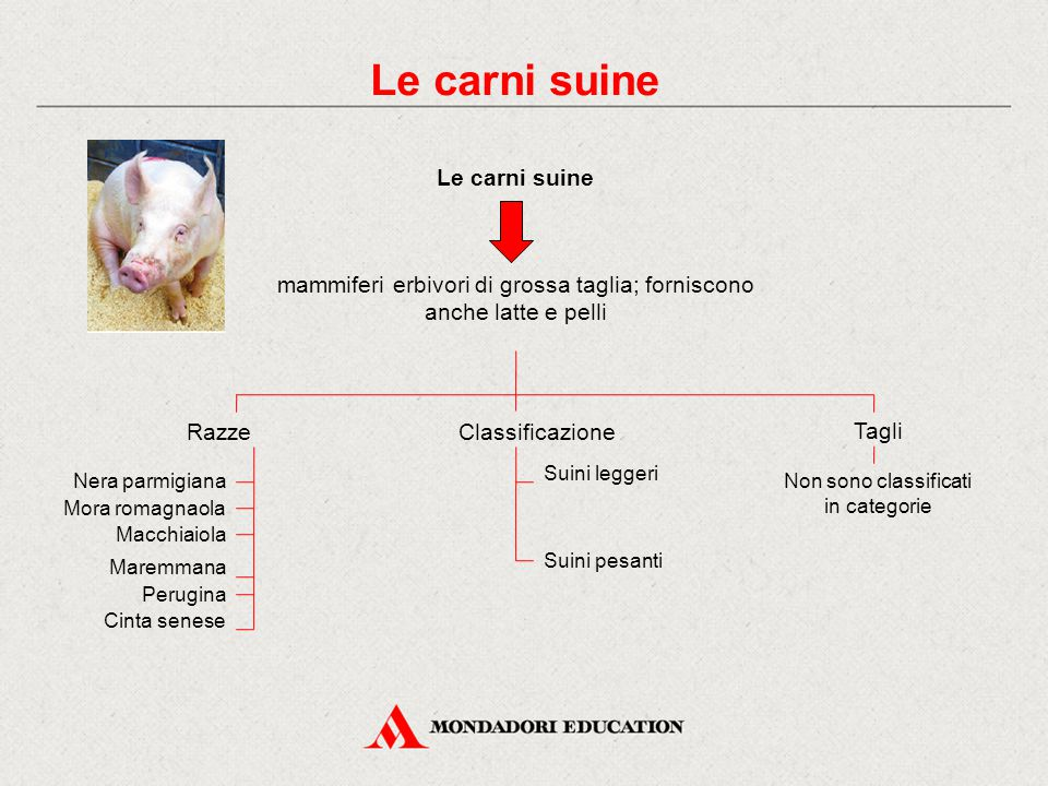 Le carni suine mammiferi erbivori di grossa taglia; forniscono anche latte e pelli RazzeClassificazione Suini leggeri Suini pesanti Nera parmigiana Mo