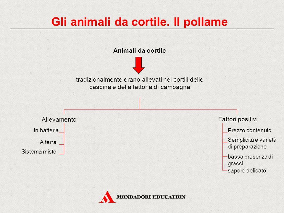 Gli animali da cortile. Il pollame Animali da cortile tradizionalmente erano allevati nei cortili delle cascine e delle fattorie di campagna Allevamen
