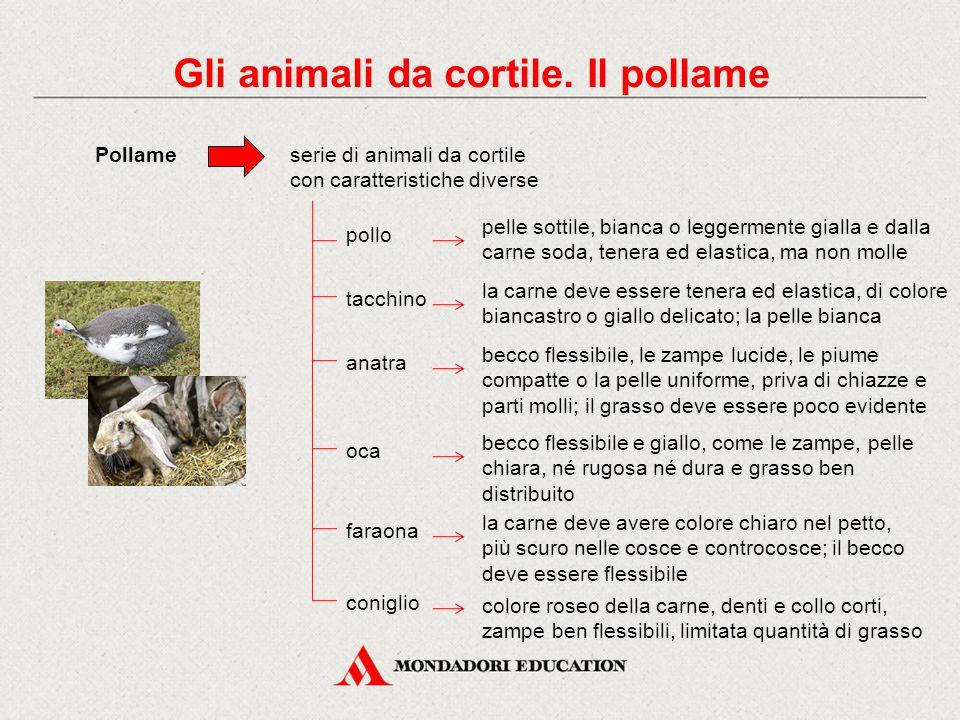 Gli animali da cortile. Il pollame Pollameserie di animali da cortile con caratteristiche diverse pollo pelle sottile, bianca o leggermente gialla e d