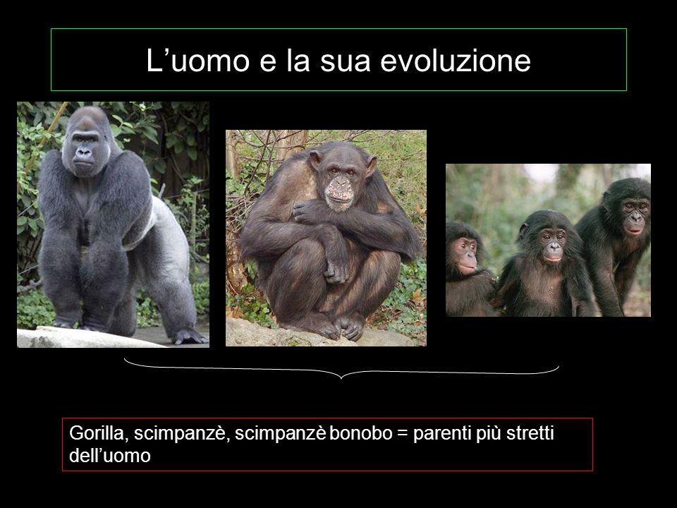 L'uomo e la sua evoluzione Gorilla, scimpanzè, scimpanzè bonobo = parenti più stretti dell'uomo