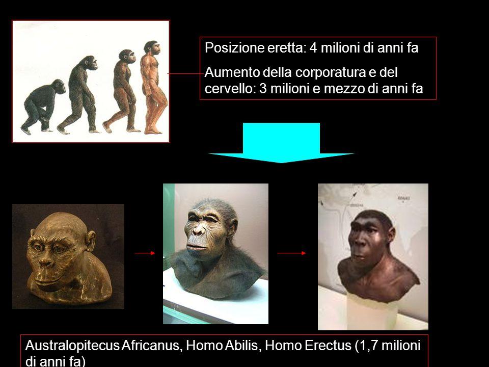 Posizione eretta: 4 milioni di anni fa Aumento della corporatura e del cervello: 3 milioni e mezzo di anni fa Australopitecus Africanus, Homo Abilis, Homo Erectus (1,7 milioni di anni fa)