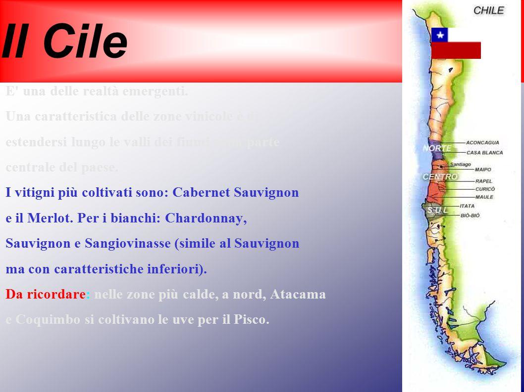 Il Cile E' una delle realtà emergenti. Una caratteristica delle zone vinicole è di estendersi lungo le valli dei fiumi nella parte centrale del paese.
