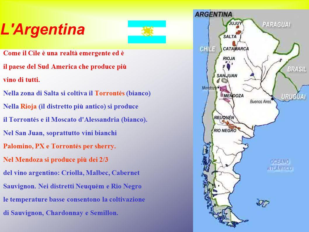 L'Argentina Come il Cile è una realtà emergente ed è il paese del Sud America che produce più vino di tutti. Nella zona di Salta si coltiva il Torront