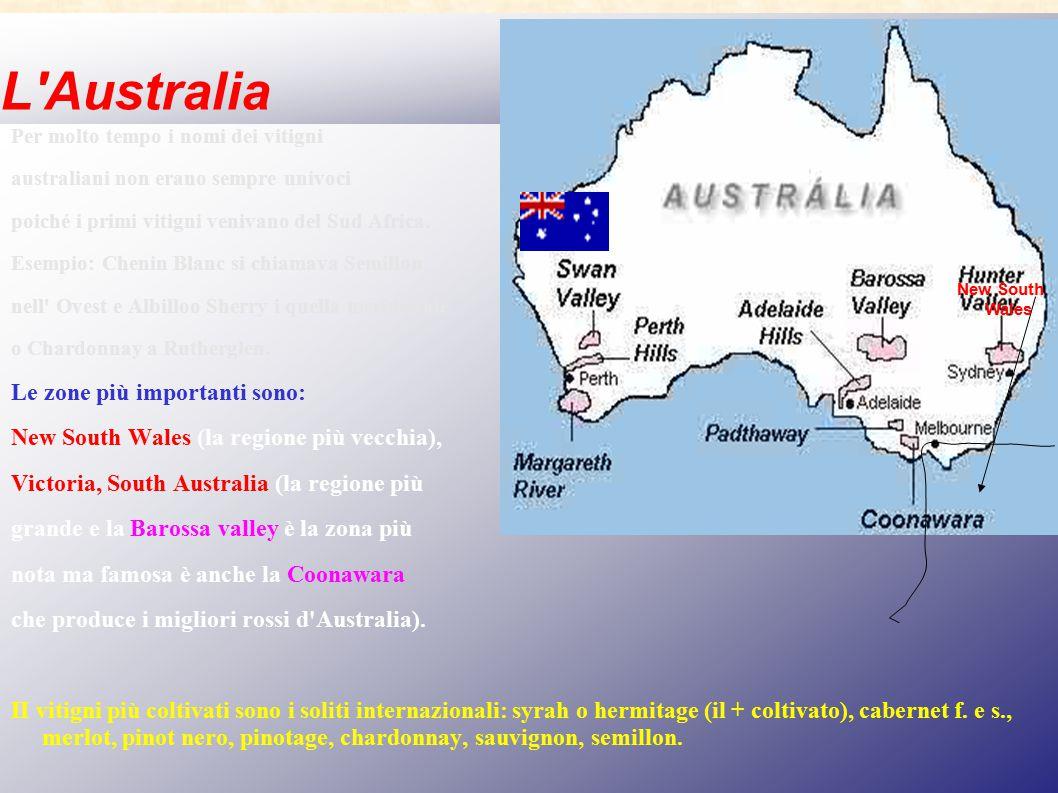 L'Australia Per molto tempo i nomi dei vitigni australiani non erano sempre univoci poiché i primi vitigni venivano del Sud Africa. Esempio: Chenin Bl