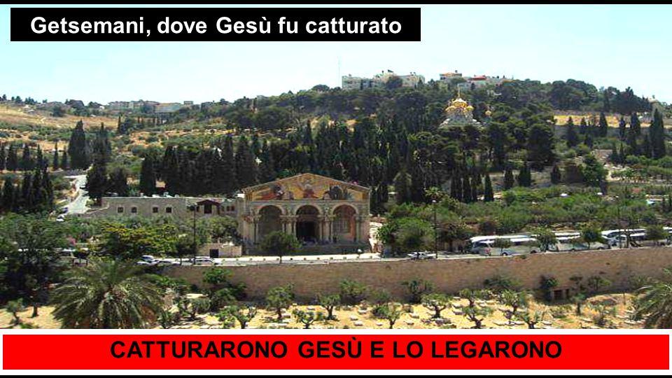 Getsemani, dove Gesù fu catturato CATTURARONO GESÙ E LO LEGARONO