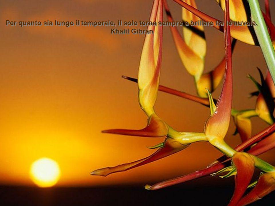 La esperanza è un albero in fiore che si dondola dolcemente al sofflo delle illusioni. Severo Catalina La esperanza è un albero in fiore che si dondol