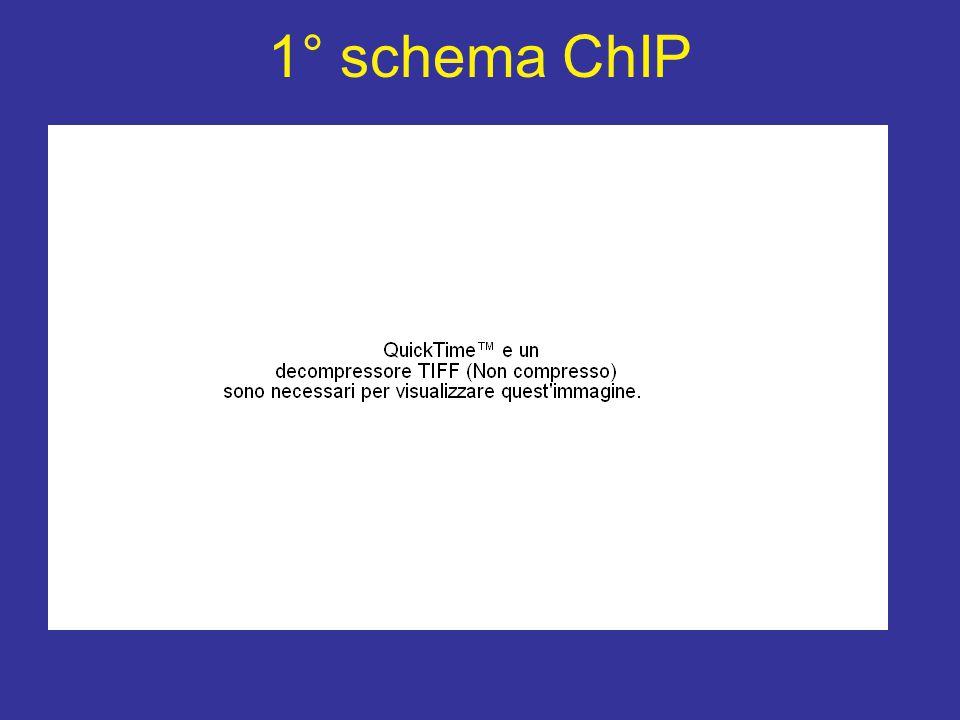 1° schema ChIP