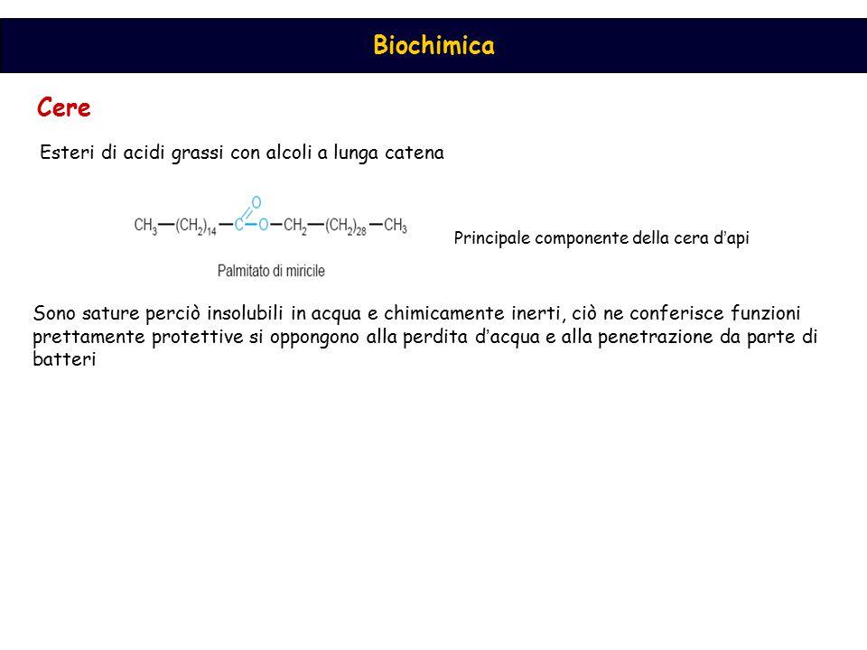 Cere Esteri di acidi grassi con alcoli a lunga catena Principale componente della cera d ' api Sono sature perciò insolubili in acqua e chimicamente i