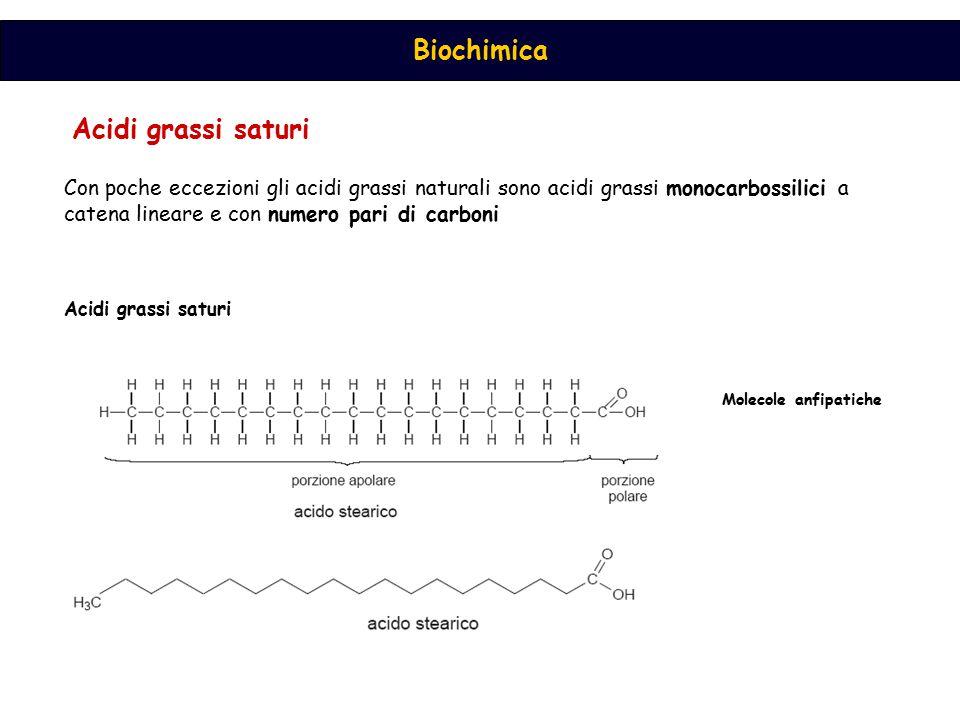 Biochimica Acidi grassi saturi Con poche eccezioni gli acidi grassi naturali sono acidi grassi monocarbossilici a catena lineare e con numero pari di