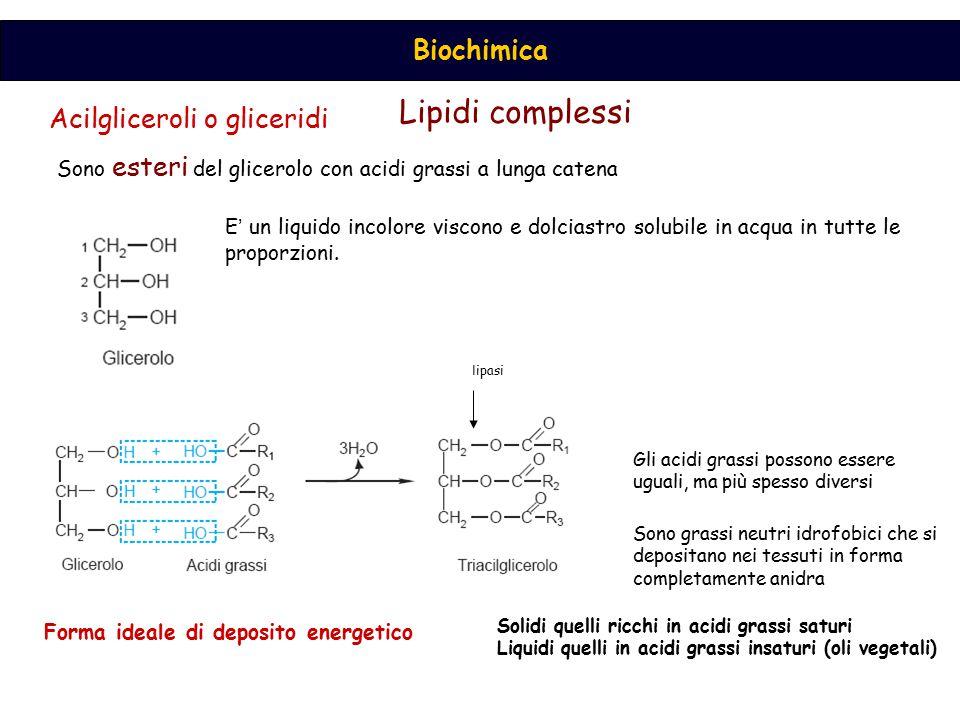 Acilgliceroli o gliceridi Sono esteri del glicerolo con acidi grassi a lunga catena E ' un liquido incolore viscono e dolciastro solubile in acqua in