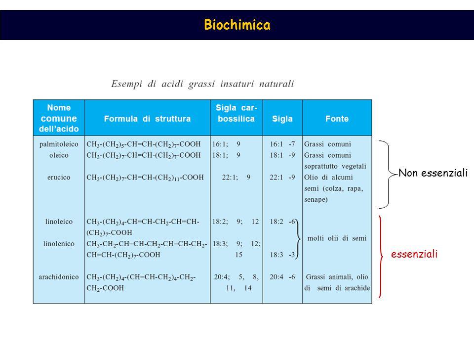 Biochimica Reazioni degli acidi grassi insaturi 1) Idrogenazione: processo utilizzato per trasformare oli vegetali in grassi solidi (margarine) 2) Ossidazione: in presenza di O 2, gli acidi grassi insaturi formano perossidi, responsabili dell ' irrancidimento dei grassi alimentari e dell ' alterazione delle membrane biologiche in vivo + O 2 │ O -O