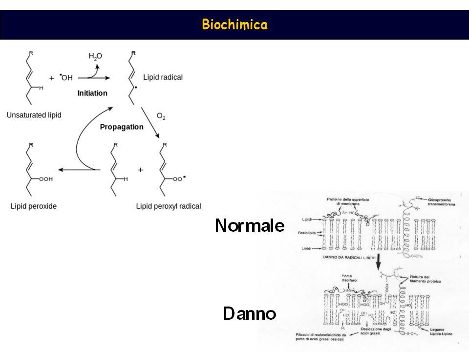 Sali degli acidi grassi o saponi Gli acidi grassi sono insolubili in acqua, i loro Sali con basi forti formano micelle disperse in fase acquosa esponendo i gruppi carbonilici all ' esterno e le code apolari all ' interno tenute vicine da interazioni idrofobiche