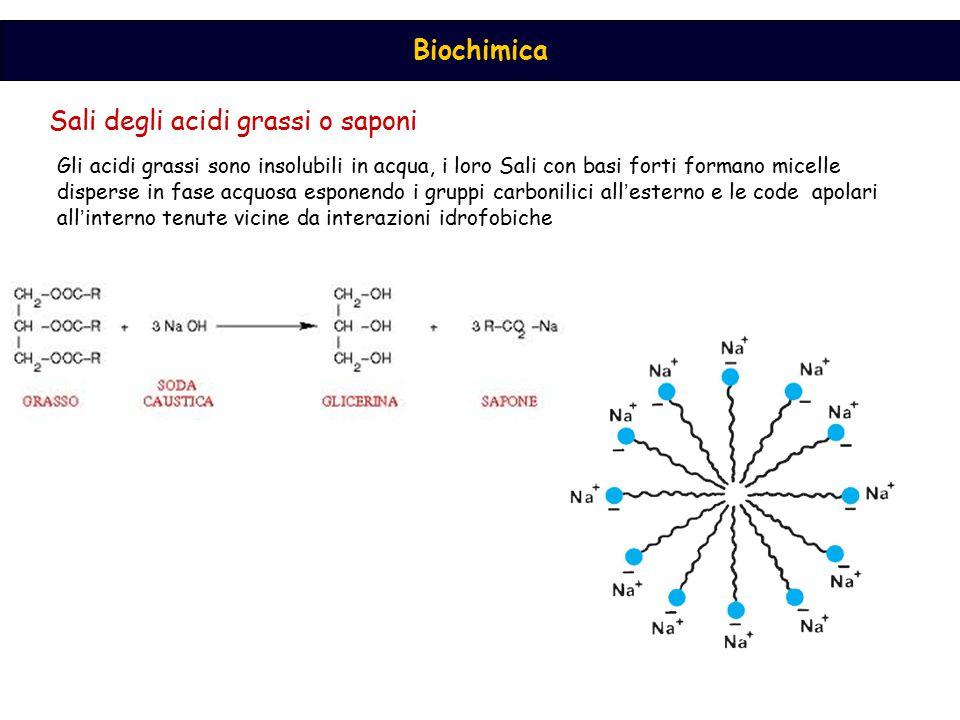 Biochimica Tale acido deriva da un acido grasso essenziale, l ' acido linolenico, che viene successivamente allungato e ulteriormente insaturato.
