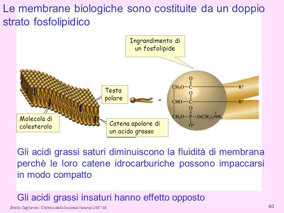 Emilio Tagliavini - Chimica delle Sostanze Naturali 2007/08 40 Molecola di colesterolo Testa polare Catena apolare di un acido grasso Le membrane biol