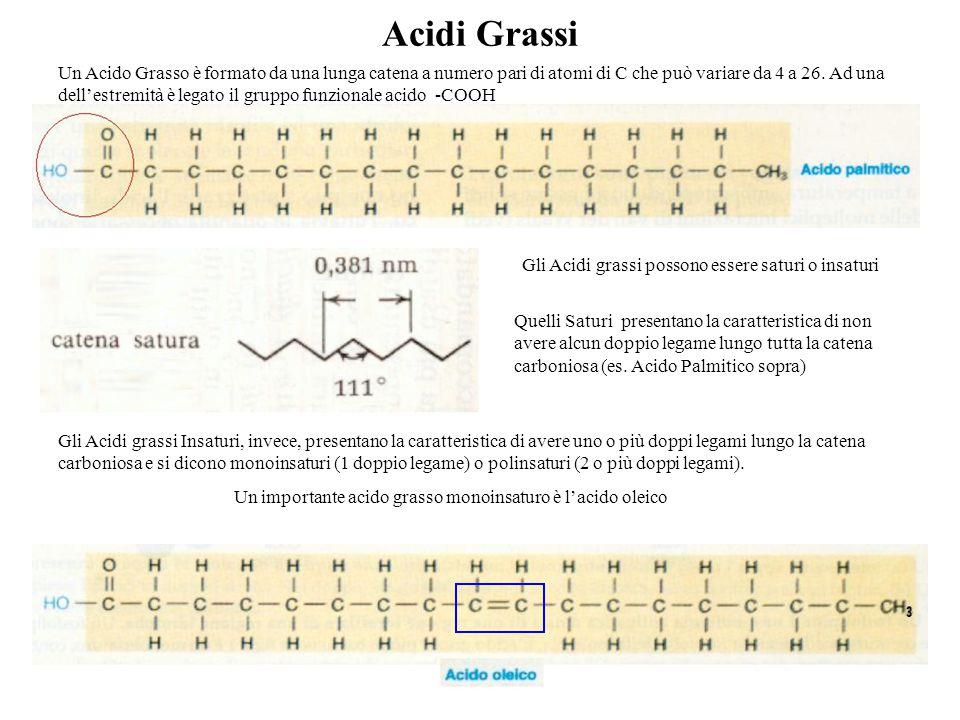 Acidi Grassi Un Acido Grasso è formato da una lunga catena a numero pari di atomi di C che può variare da 4 a 26. Ad una dell'estremità è legato il gr