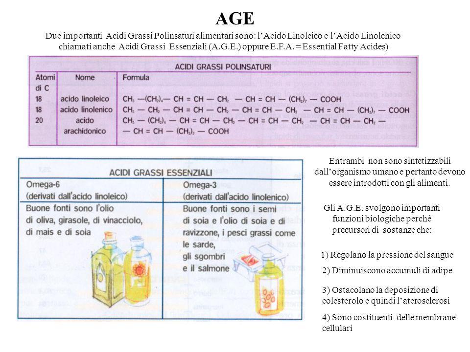 AGE Due importanti Acidi Grassi Polinsaturi alimentari sono: l'Acido Linoleico e l'Acido Linolenico chiamati anche Acidi Grassi Essenziali (A.G.E.) op