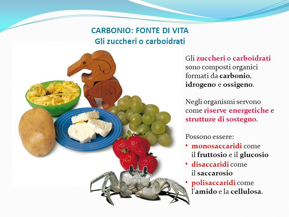 CARBONIO: FONTE DI VITA Gli zuccheri o carboidrati Gli zuccheri o carboidrati sono composti organici formati da carbonio, idrogeno e ossigeno. Negli o