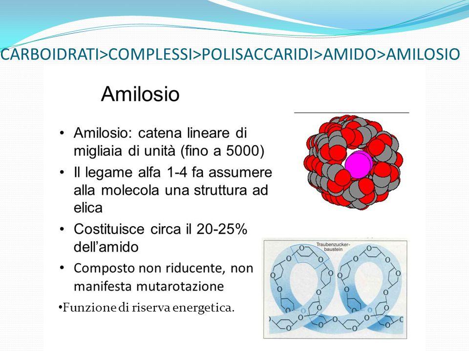CARBOIDRATI>COMPLESSI>POLISACCARIDI>AMIDO>AMILOSIO Funzione di riserva energetica.