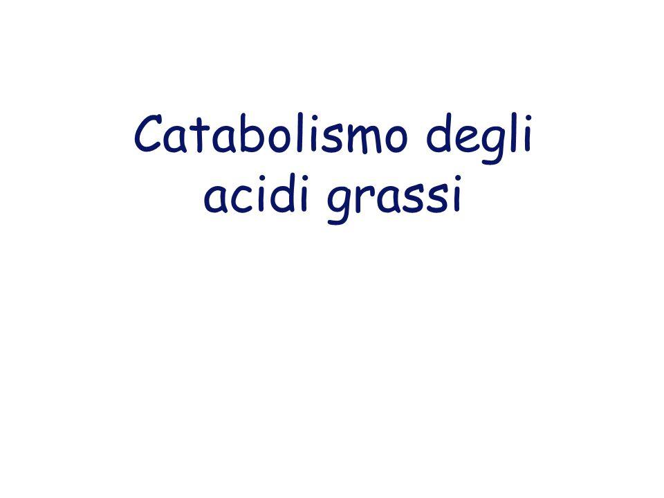 Catabolismo degli acidi grassi