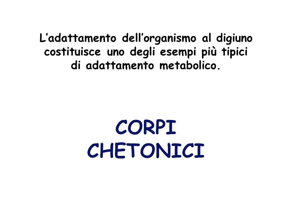CORPI CHETONICI L'adattamento dell'organismo al digiuno costituisce uno degli esempi più tipici di adattamento metabolico.