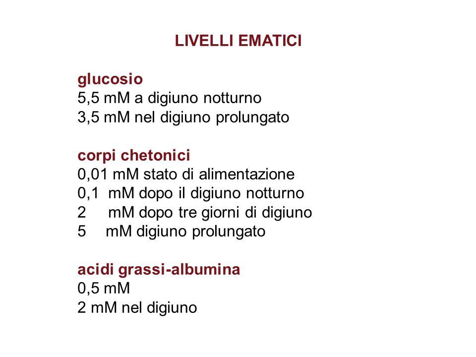 LIVELLI EMATICI glucosio 5,5 mM a digiuno notturno 3,5 mM nel digiuno prolungato corpi chetonici 0,01 mM stato di alimentazione 0,1 mM dopo il digiuno notturno 2 mM dopo tre giorni di digiuno 5 mM digiuno prolungato acidi grassi-albumina 0,5 mM 2 mM nel digiuno
