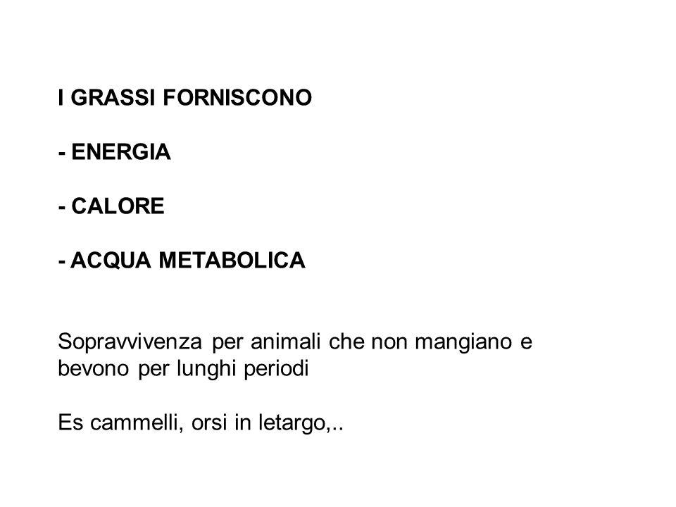 I GRASSI FORNISCONO - ENERGIA - CALORE - ACQUA METABOLICA Sopravvivenza per animali che non mangiano e bevono per lunghi periodi Es cammelli, orsi in letargo,..