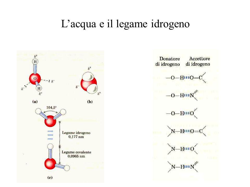 L'acqua e il legame idrogeno
