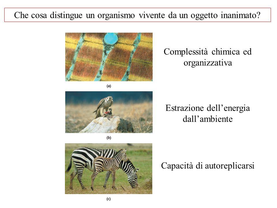 Che cosa distingue un organismo vivente da un oggetto inanimato? Complessità chimica ed organizzativa Estrazione dell'energia dall'ambiente Capacità d