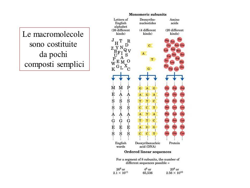 Disaccaridi Legame O-glicosidico Estremità riducenteEstremità non riducente