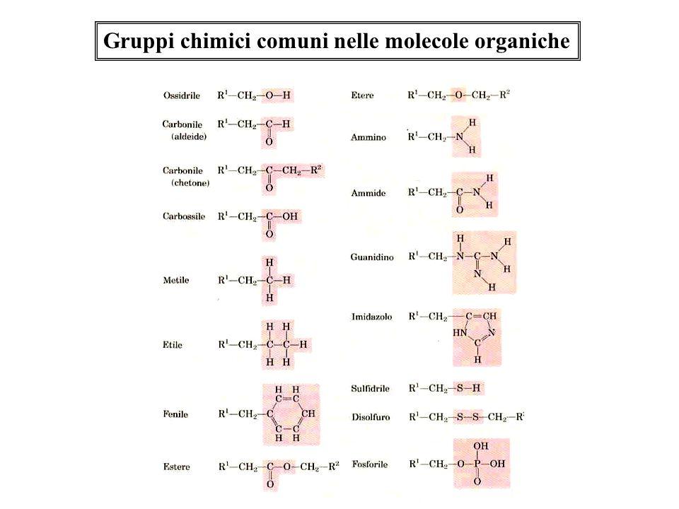 Gruppi chimici comuni nelle molecole organiche