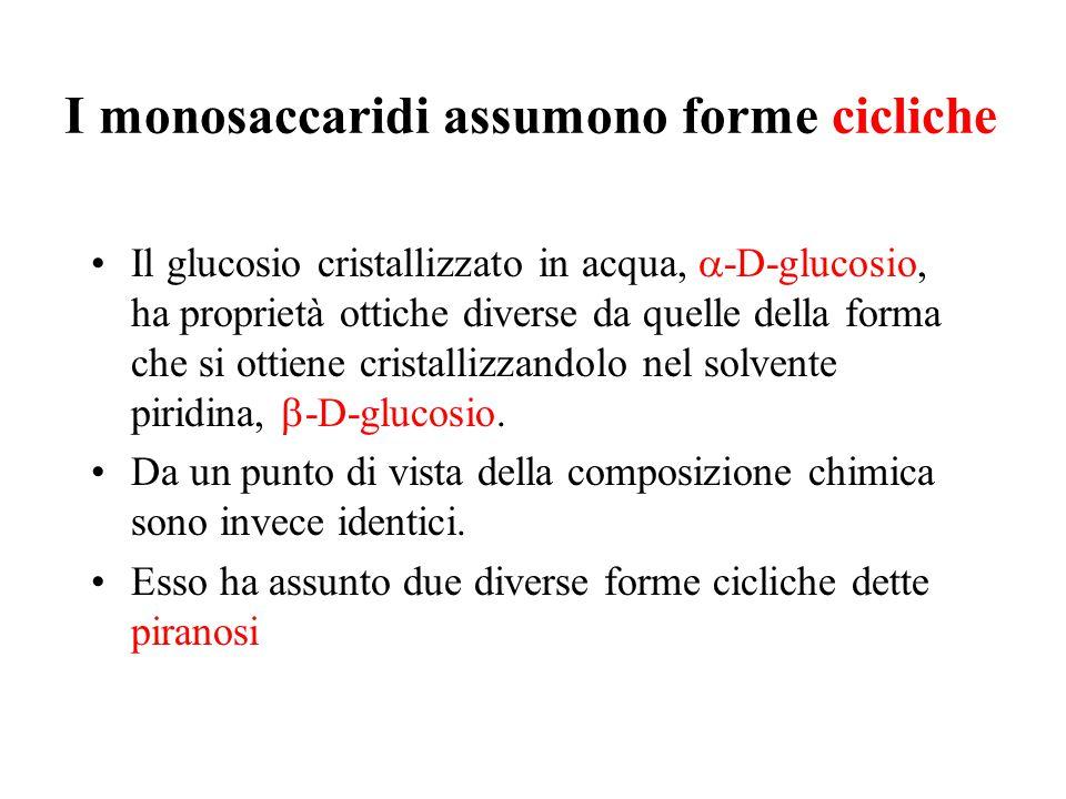 I monosaccaridi assumono forme cicliche Il glucosio cristallizzato in acqua,  -D-glucosio, ha proprietà ottiche diverse da quelle della forma che si