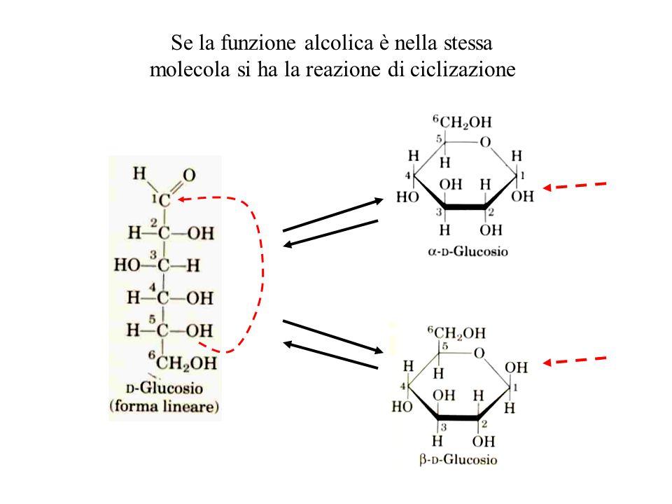 Se la funzione alcolica è nella stessa molecola si ha la reazione di ciclizazione
