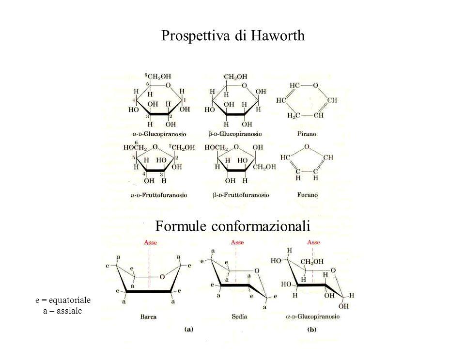 Prospettiva di Haworth Formule conformazionali e = equatoriale a = assiale