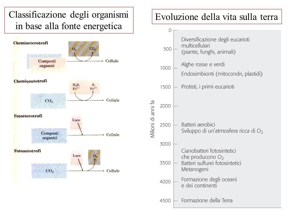 Evoluzione della vita sulla terra Classificazione degli organismi in base alla fonte energetica