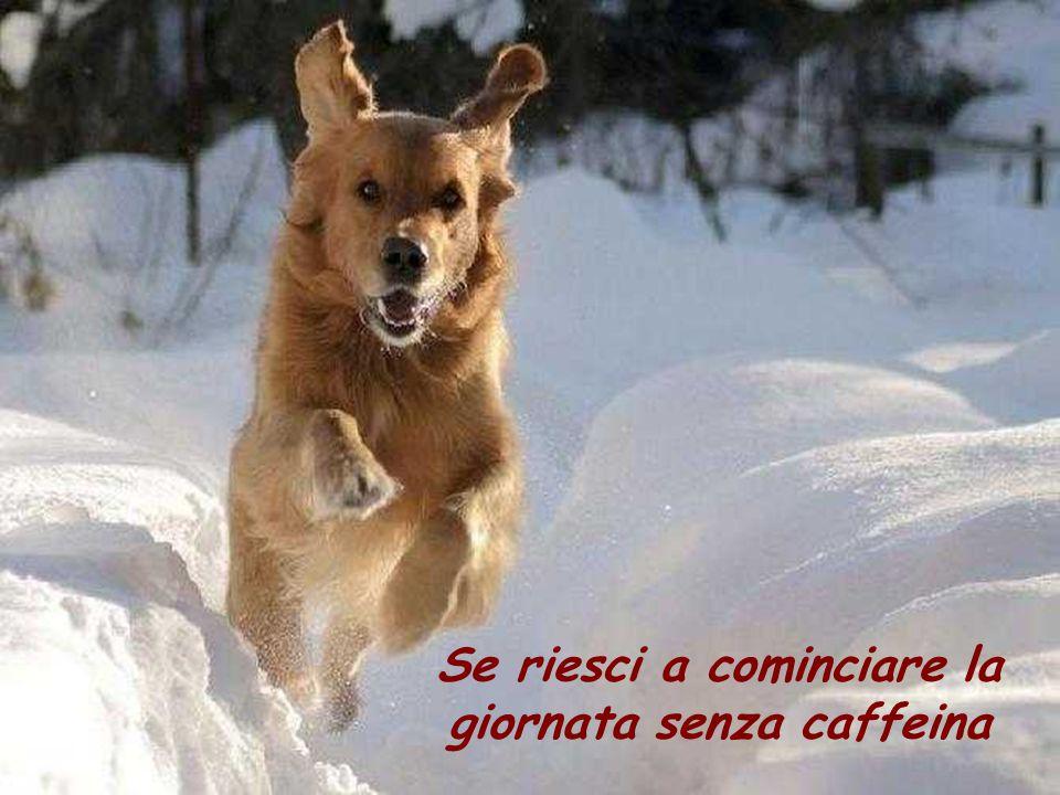 Se riesci a cominciare la giornata senza caffeina