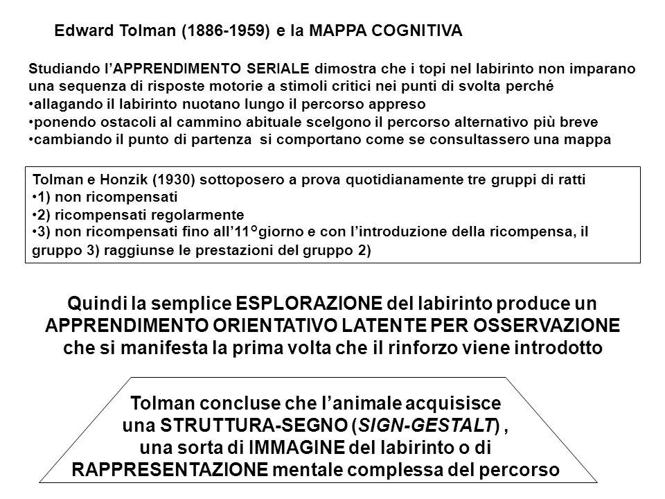 Edward Tolman (1886-1959) e la MAPPA COGNITIVA Studiando l'APPRENDIMENTO SERIALE dimostra che i topi nel labirinto non imparano una sequenza di rispos