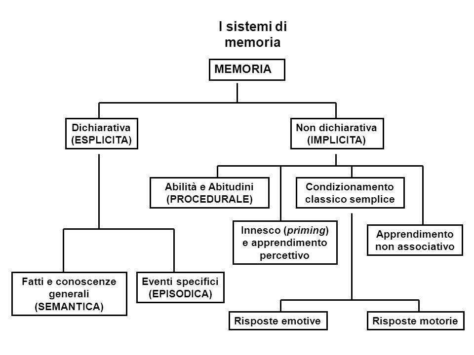 I sistemi di memoria MEMORIA Dichiarativa (ESPLICITA) Non dichiarativa (IMPLICITA) Fatti e conoscenze generali (SEMANTICA) Eventi specifici (EPISODICA) Abilità e Abitudini (PROCEDURALE) Innesco (priming) e apprendimento percettivo Condizionamento classico semplice Apprendimento non associativo Risposte emotiveRisposte motorie