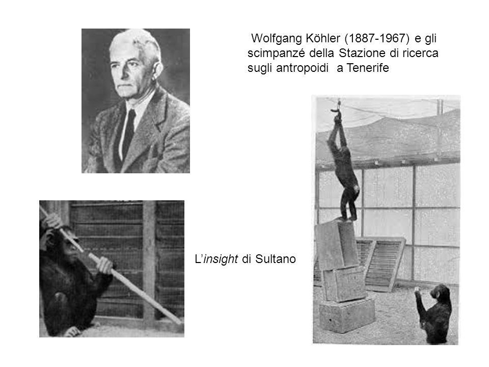 Wolfgang Köhler (1887-1967) e gli scimpanzé della Stazione di ricerca sugli antropoidi a Tenerife L'insight di Sultano