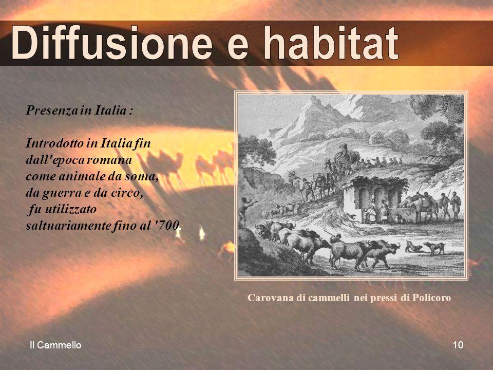 Il Cammello10 Presenza in Italia : Introdotto in Italia fin dall'epoca romana come animale da soma, da guerra e da circo, fu utilizzato saltuariamente