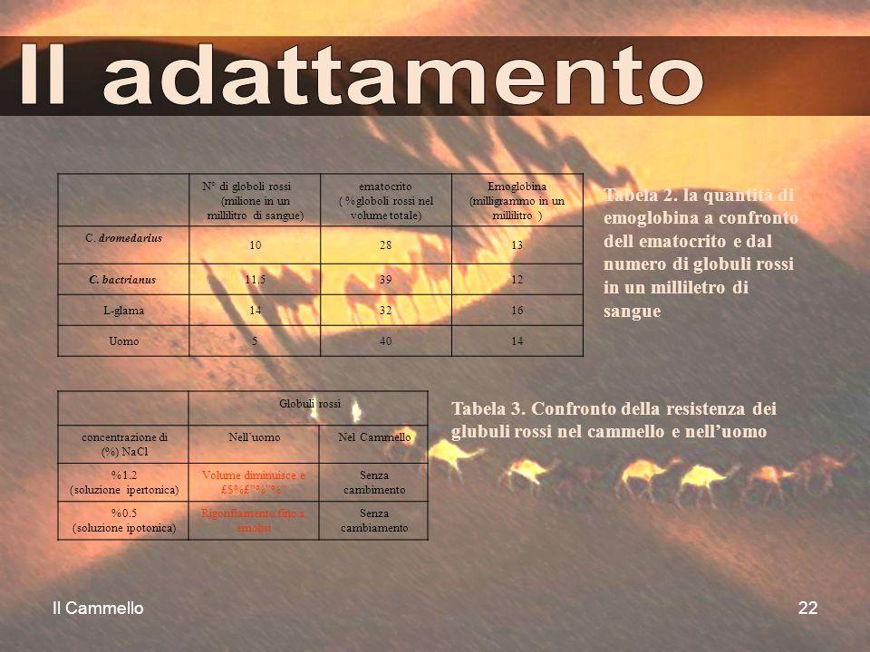 """Il Cammello22 Globuli rossi concentrazione di NaCl (%) Nell'uomoNel Cammello 1.2% (soluzione ipertonica) Volume diminuisce e £$%£""""%""""%"""" Senza cambiment"""